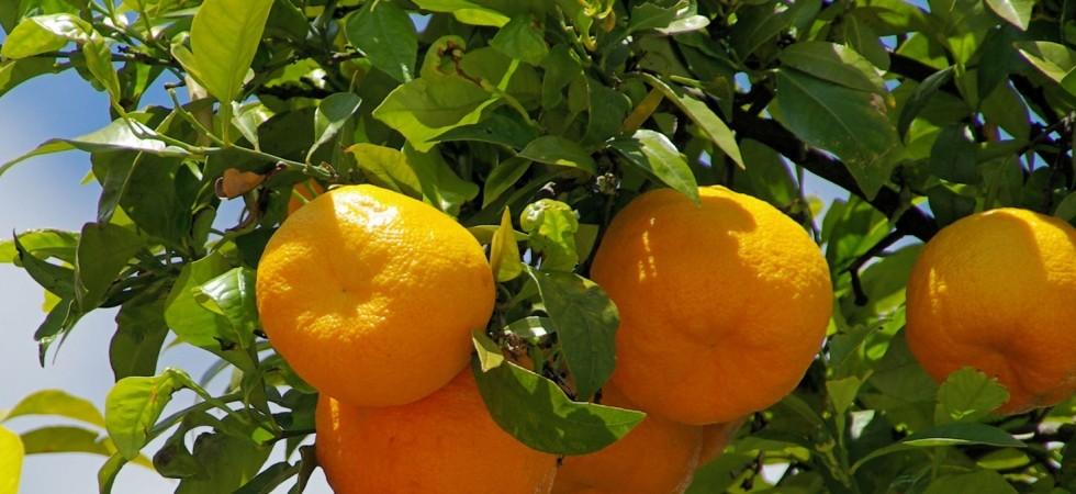 -c1900x673_apfel-orangen-saft